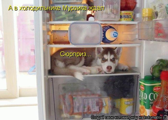 Котоматрица: А в холодильнике Мурзика ждал  Сюрприз...