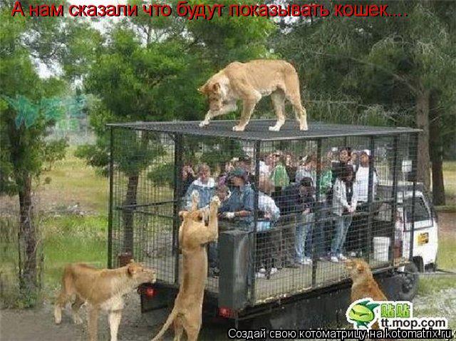 Котоматрица: А нам сказали что будут показывать кошек.... А нам сказали что будут показывать кошек....