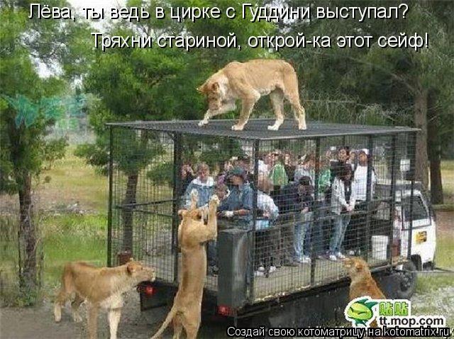 Котоматрица: Лёва, ты ведь в цирке с Гуддини выступал? Тряхни стариной, открой-ка этот сейф!