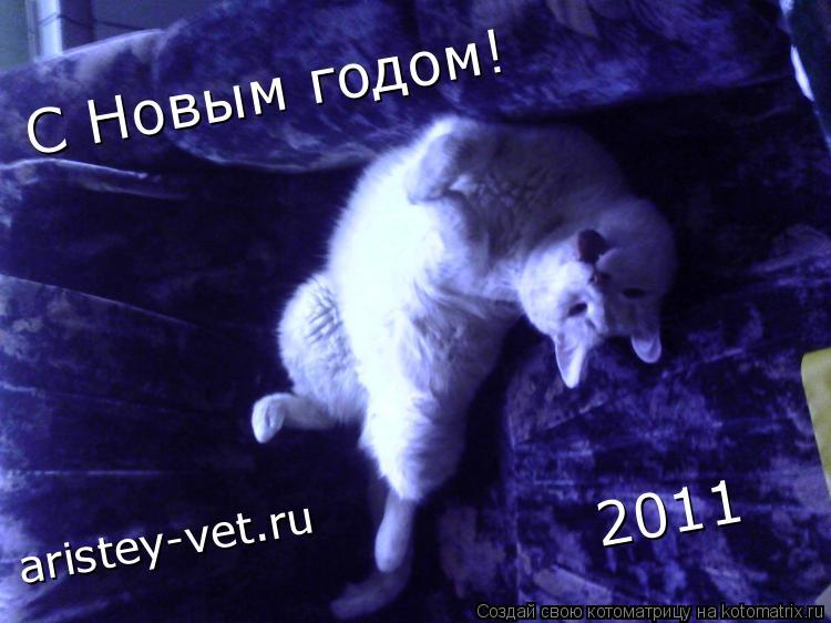 Котоматрица: С Новым годом! 2011 aristey-vet.ru