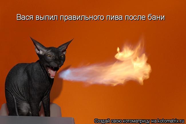 Котоматрица: Вася выпил правильного пива после бани