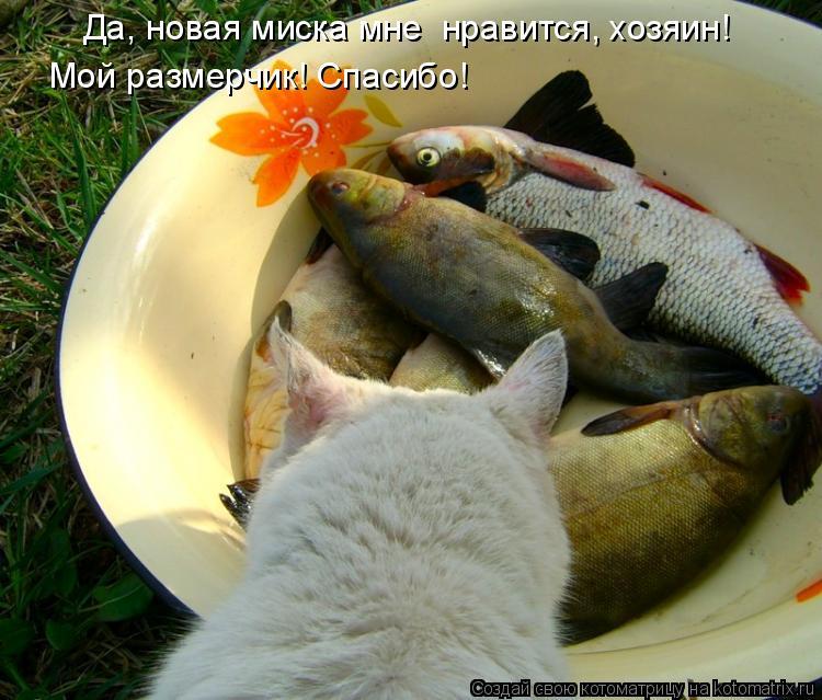 Котоматрица: Да, новая миска мне  нравится, хозяин!  Мой размерчик! Спасибо!