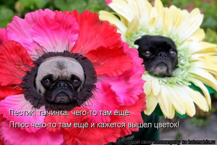 Котоматрица: — Пестик, тычинка, чего-то там ещё…   Плюс чего-то там ещё и кажется вышел цветок!