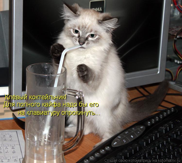 Котоматрица: Клёвый коктейльчик! Для полного кайфа надо бы его на клавиатуру опрокинуть...