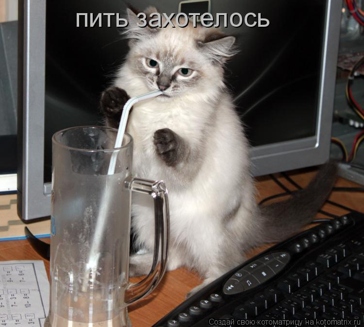 Котоматрица: пить захотелось