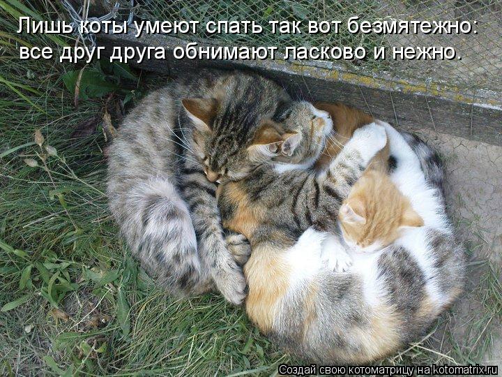 Котоматрица: все друг друга обнимают ласково и нежно. Лишь коты умеют спать так вот безмятежно: