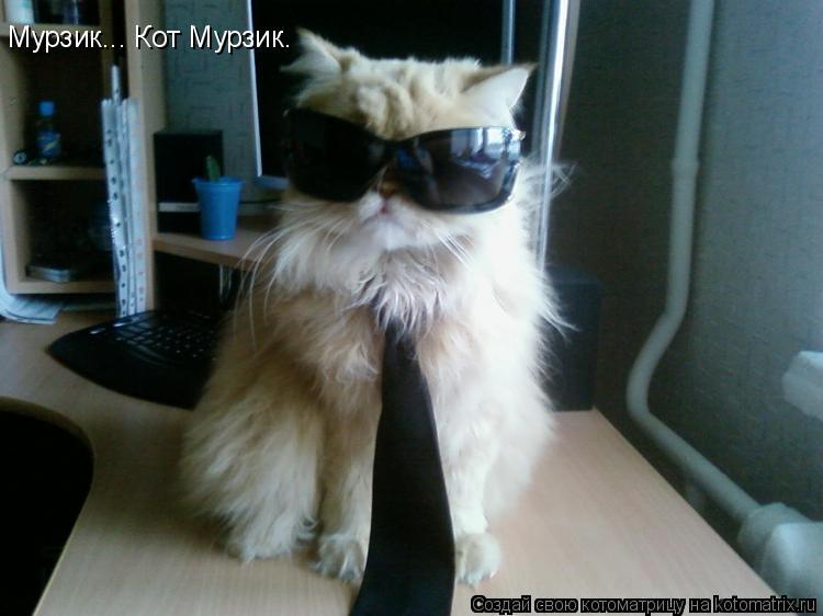 Котоматрица: Мурзик... Кот Мурзик.
