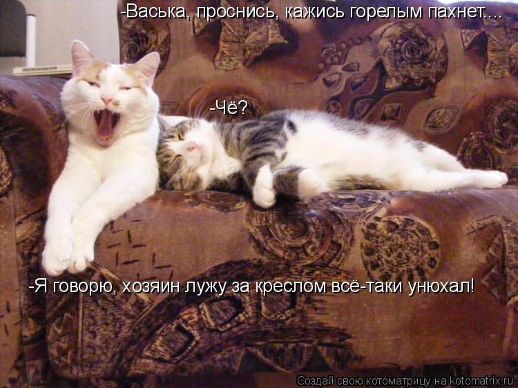 Котоматрица: -Васька, проснись, кажись горелым пахнет.... -Чё? -Я говорю, хозяин лужу за креслом всё-таки унюхал!