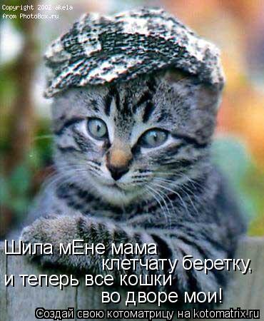 Котоматрица: Шила мЕне мама клетчату беретку, и теперь все кошки  во дворе мои!