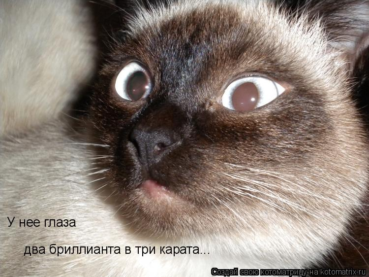 Котоматрица: У нее глаза два бриллианта в три карата...