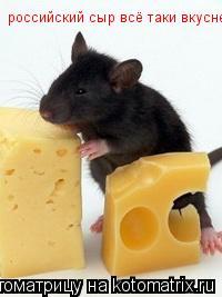 Котоматрица: российский сыр всё таки вкусней