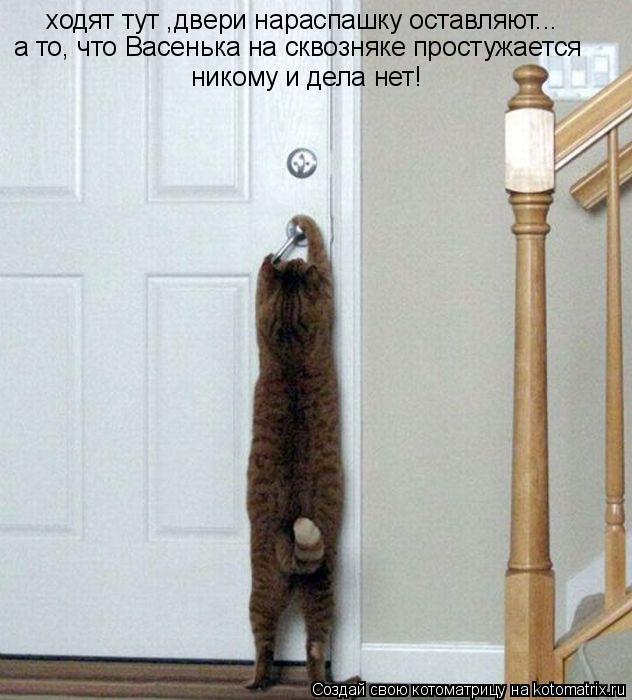 Котоматрица: ходят тут ,двери нараспашку оставляют... никому и дела нет! а то, что Васенька на сквозняке простужается