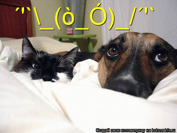 Котоматрица: ´'`\_(ò_Ó)_/´'`