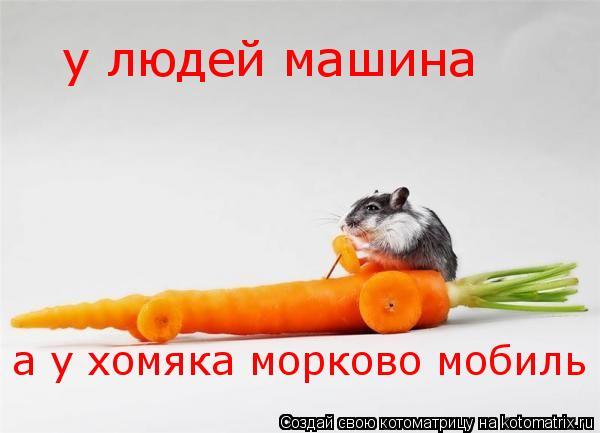 Котоматрица: у людей машина а у хомяка морково мобиль