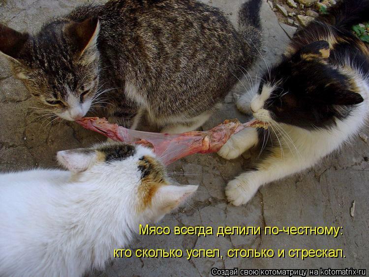 Котоматрица: Мясо всегда делили по-честному: кто сколько успел, столько и стрескал.