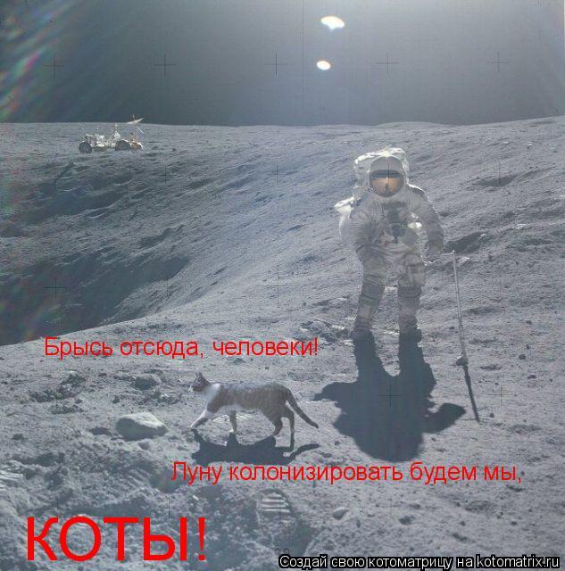 Котоматрица: Брысь отсюда, человеки!  Луну колонизировать будем мы, КОТЫ!