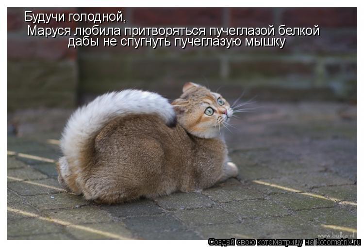 Котоматрица: дабы не спугнуть пучеглазую мышку Маруся любила притворяться пучеглазой белкой Будучи голодной,