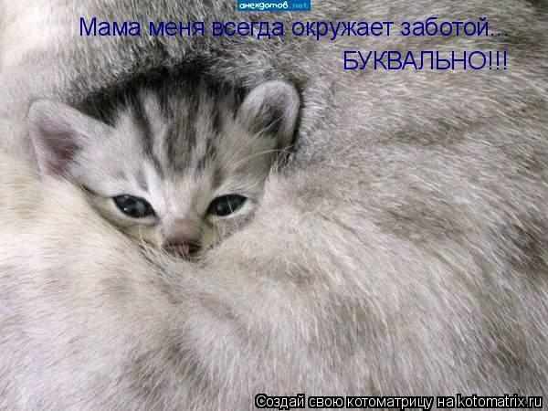 Котоматрица: Мама меня всегда окружает заботой... БУКВАЛЬНО!!!