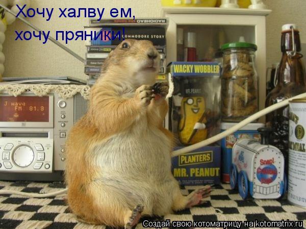 Котоматрица: Хочу халву ем, хочу пряники!