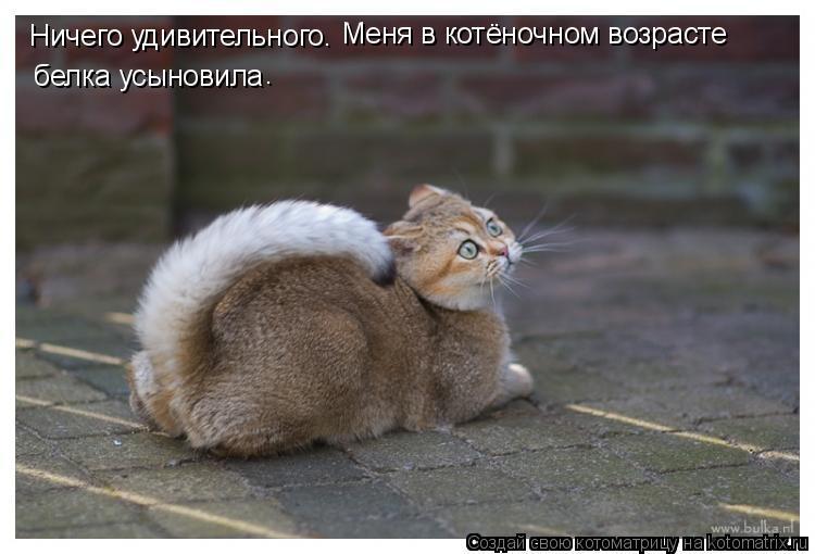 Котоматрица: Ничего удивительного. Меня в котёночном возрасте белка усыновила .