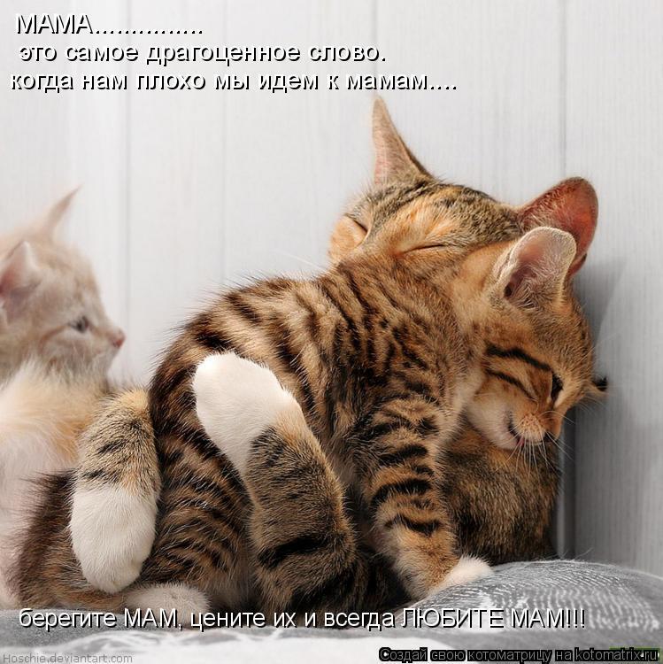 Котоматрица: МАМА............... это самое драгоценное слово. когда нам плохо мы идем к мамам.... берегите МАМ, цените их и всегда ЛЮБИТЕ МАМ!!!