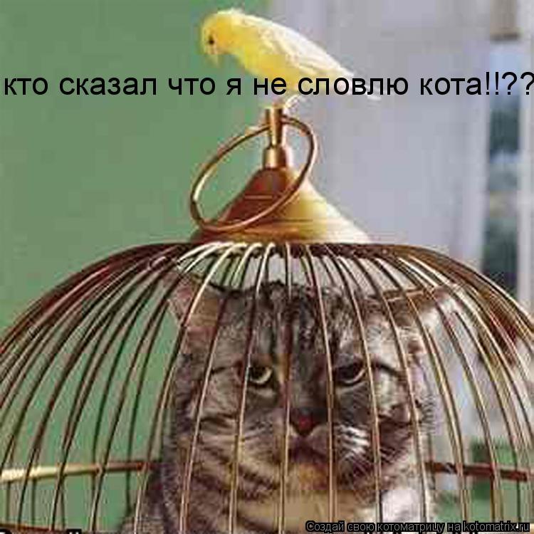 Котоматрица: кто сказал что я не словлю кота!!??