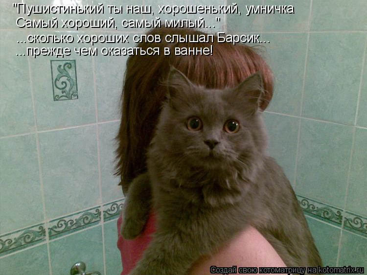 """Котоматрица: """"Пушистинький ты наш, хорошенький, умничка Самый хороший, самый милый..."""" ...сколько хороших слов слышал Барсик... ...прежде чем оказаться в ванн"""