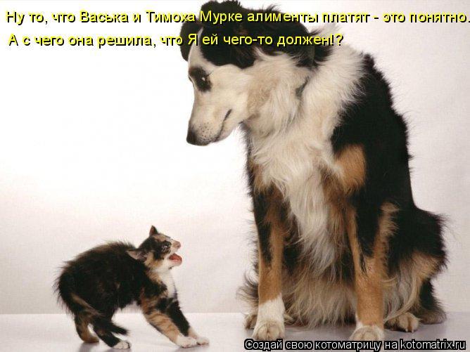 Котоматрица: Ну то, что Васька и Тимоха Мурке алименты платят - это понятно. А с чего она решила, что Я ей чего-то должен!?
