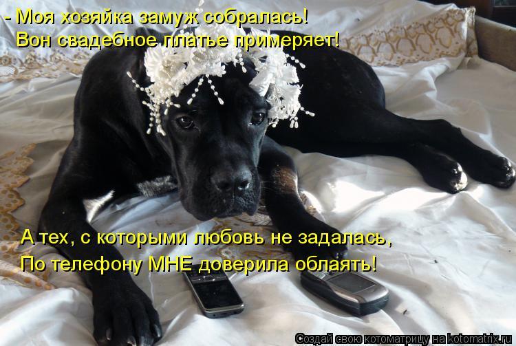 Котоматрица: - Моя хозяйка замуж собралась! Вон свадебное платье примеряет! По телефону МНЕ доверила облаять! А тех, с которыми любовь не задалась,