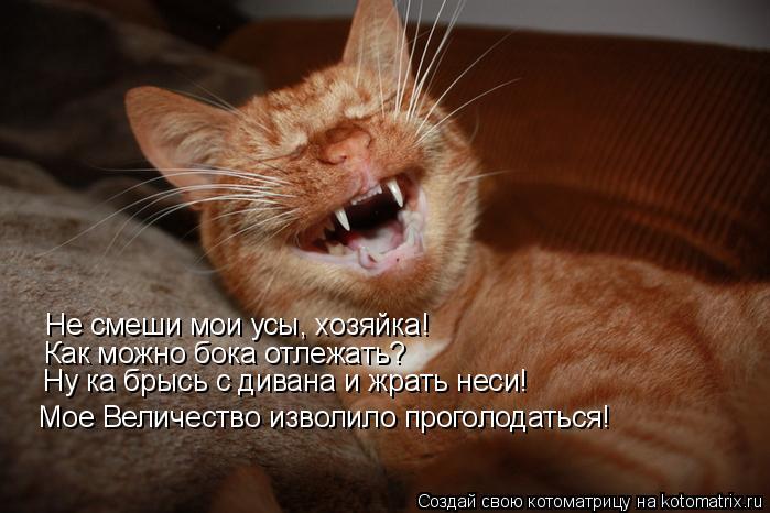 Котоматрица: Мое Величество изволило проголодаться! Не смеши мои усы, хозяйка!  Как можно бока отлежать? Ну ка брысь с дивана и жрать неси!
