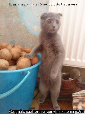 Котоматрица: Хозяин хватит пить ! Я не госторбайтер я котэ !