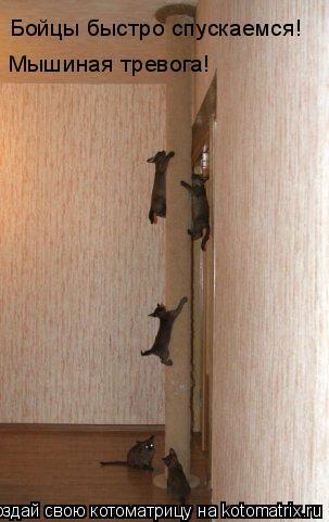 Котоматрица: Бойцы быстро спускаемся! Мышиная тревога!