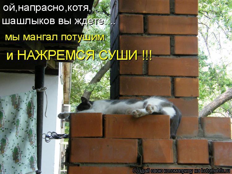 Котоматрица: ой,напрасно,котя, шашлыков вы ждете.... мы мангал потушим  и НАЖРЕМСЯ СУШИ !!!