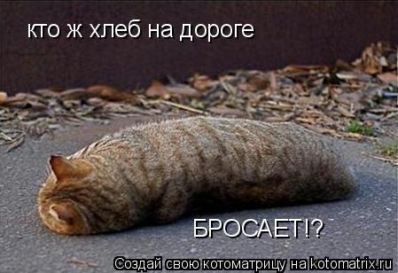Котоматрица: кто ж хлеб на дороге БРОСАЕТ!?