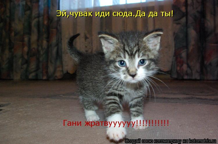 Котоматрица: Эй,чувак иди сюда.Да да ты! Гани жратвуууууу!!!!!!!!!!!