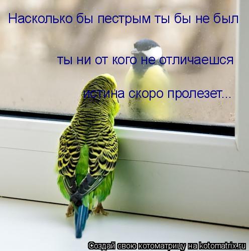Котоматрица: Насколько бы пестрым ты бы не был ты ни от кого не отличаешся истина скоро пролезет...