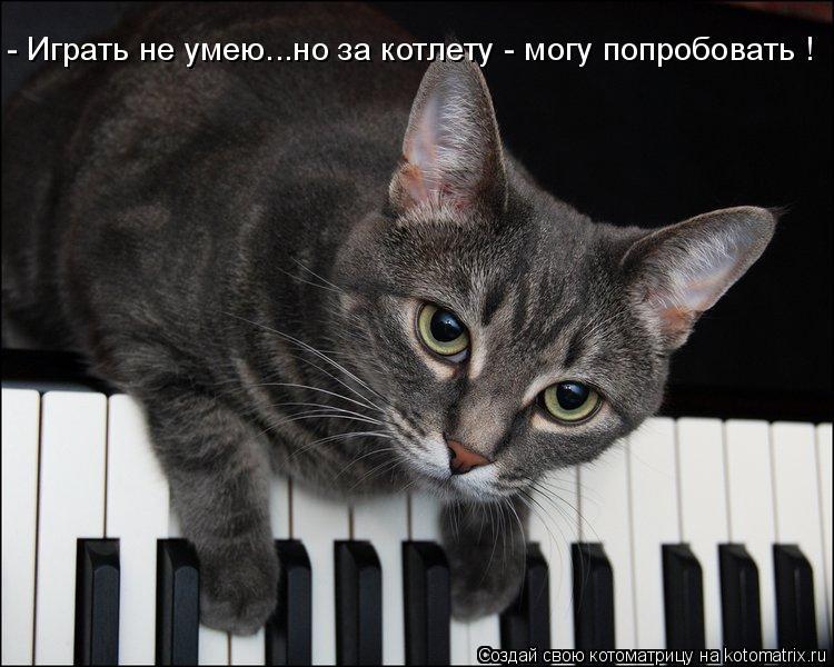 Котоматрица: - Играть не умею...но за котлету - могу попробовать !
