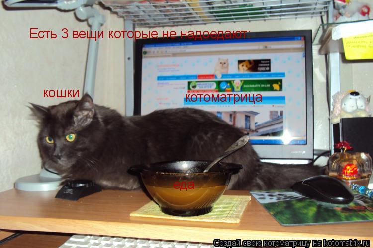 Котоматрица: Есть 3 вещи которые не надоедают: кошки еда котоматрица