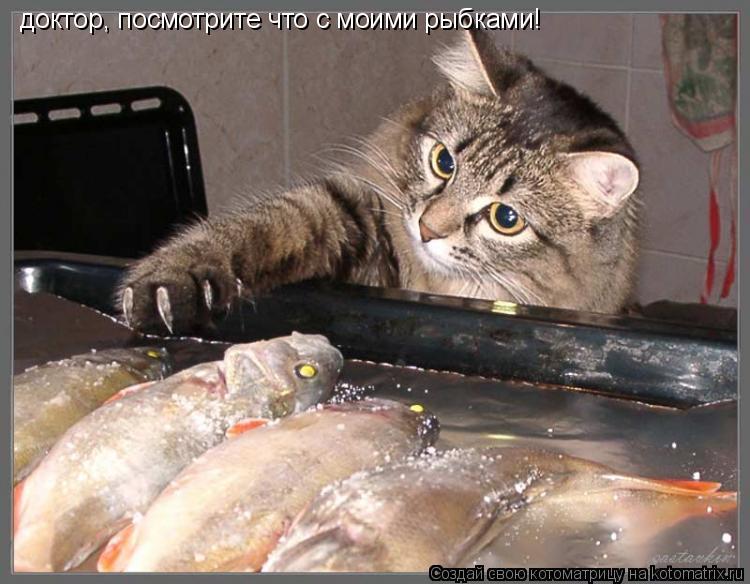Котоматрица: доктор, посмотрите что с моими рыбками!