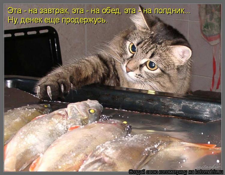 Котоматрица: Эта - на завтрак, эта - на обед, эта - на полдник... Ну, денек еще продержусь.