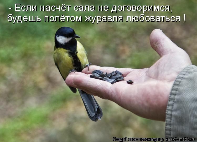 Котоматрица: - Если насчёт сала не договоримся, будешь полётом журавля любоваться !