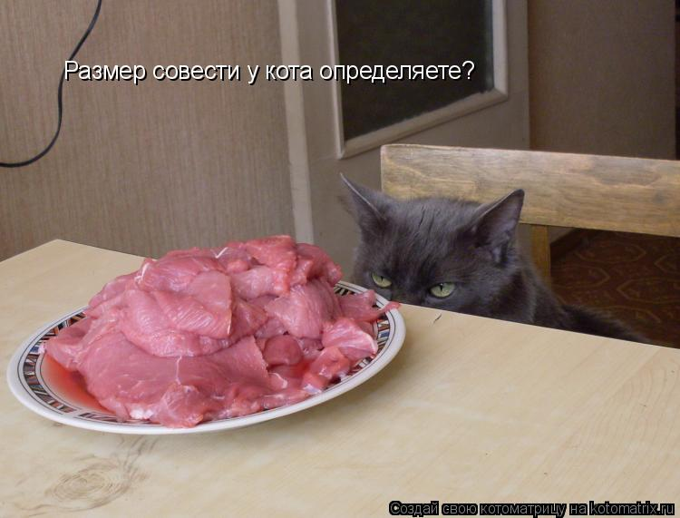 Котоматрица: Размер совести у кота определяете?