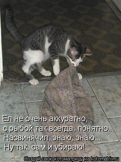 Котоматрица: Ел не очень аккуратно, с рыбой так всегда, понятно... Насвинячил, знаю, знаю... Ну так, сам и убираю!