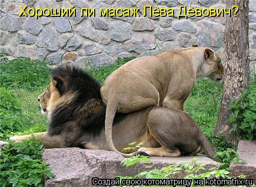 Котоматрица: Хороший ли масаж Лёва Дёвович?