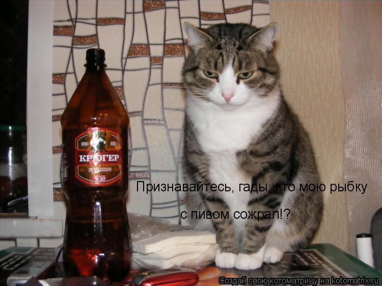 Котоматрица: Признавайтесь, гады, кто мою рыбку с пивом сожрал!?