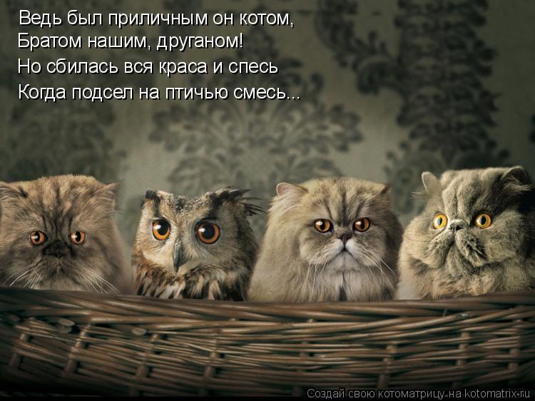 Котоматрица: Ведь был приличным он котом, Братом нашим, друганом! Но сбилась вся краса и спесь Когда подсел на птичью смесь...