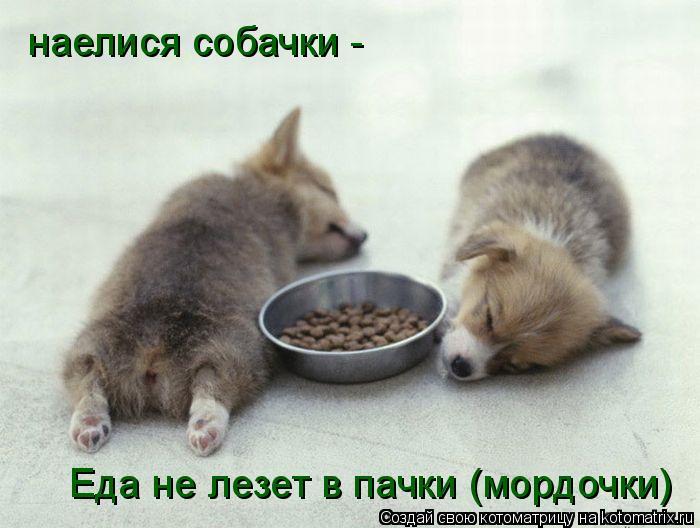 Котоматрица: наелися собачки - Еда не лезет в пачки (мордочки)