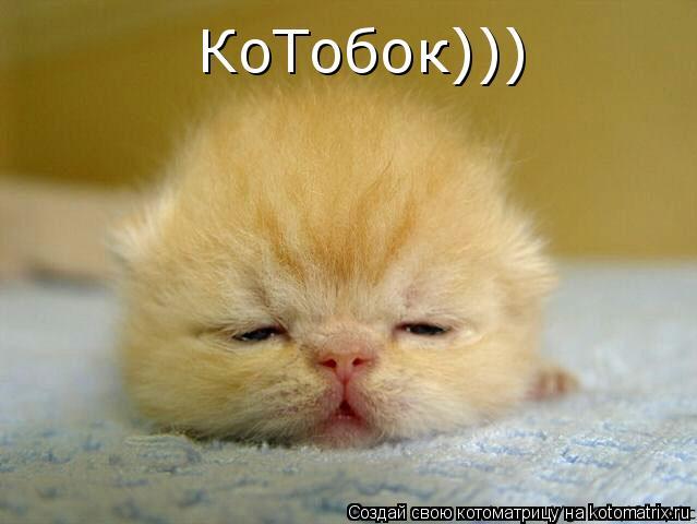 Котоматрица: КоТобок)))