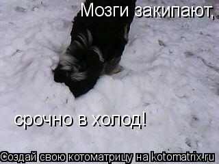 Котоматрица: Мозги закипают, срочно в холод!  срочно в холод!
