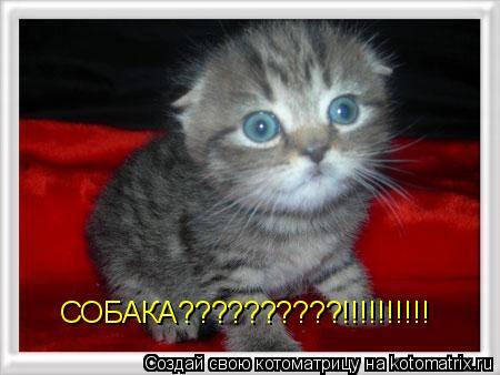 Котоматрица: СОБАКА??????????!!!!!!!!!!